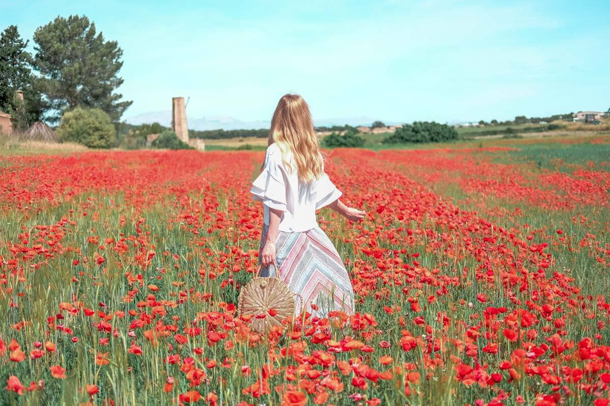 poppy field Mallorca